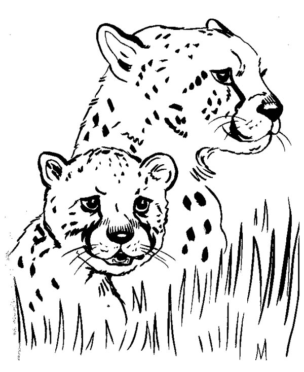 600x734 Cheetah Hide Under The Grass Coloring Page