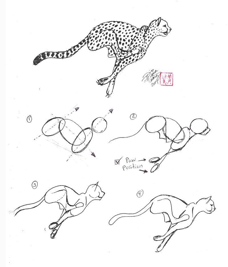 800x936 Draw A Cheetah By Diana Huang