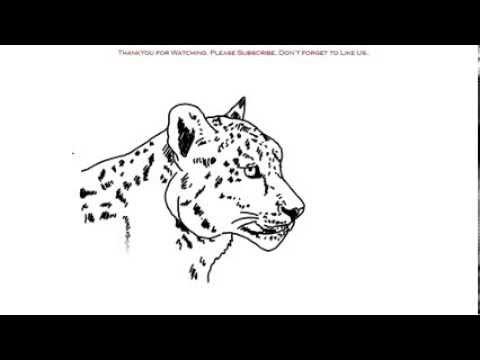 480x360 How To Draw A Cheetah Yzarts Yzarts