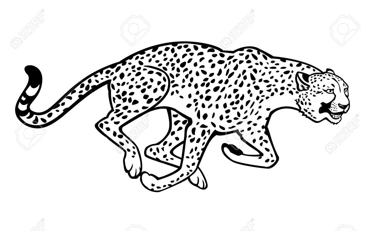 1300x810 Running Cheetah Black And White Horizontal Image Isolated