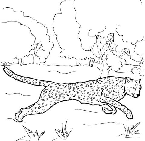 480x468 Running Cheetah Coloring Page Free Printable Coloring Pages
