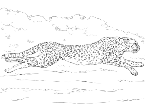 480x360 Running Cheetah Coloring Page Free Printable Coloring Pages