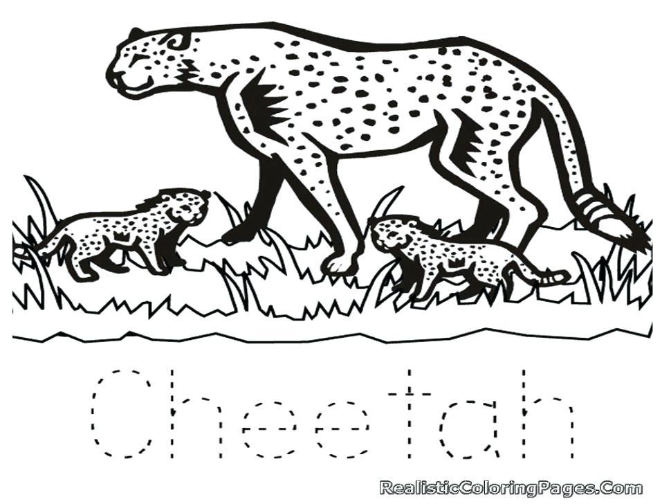970x728 Cheetah Coloring Page