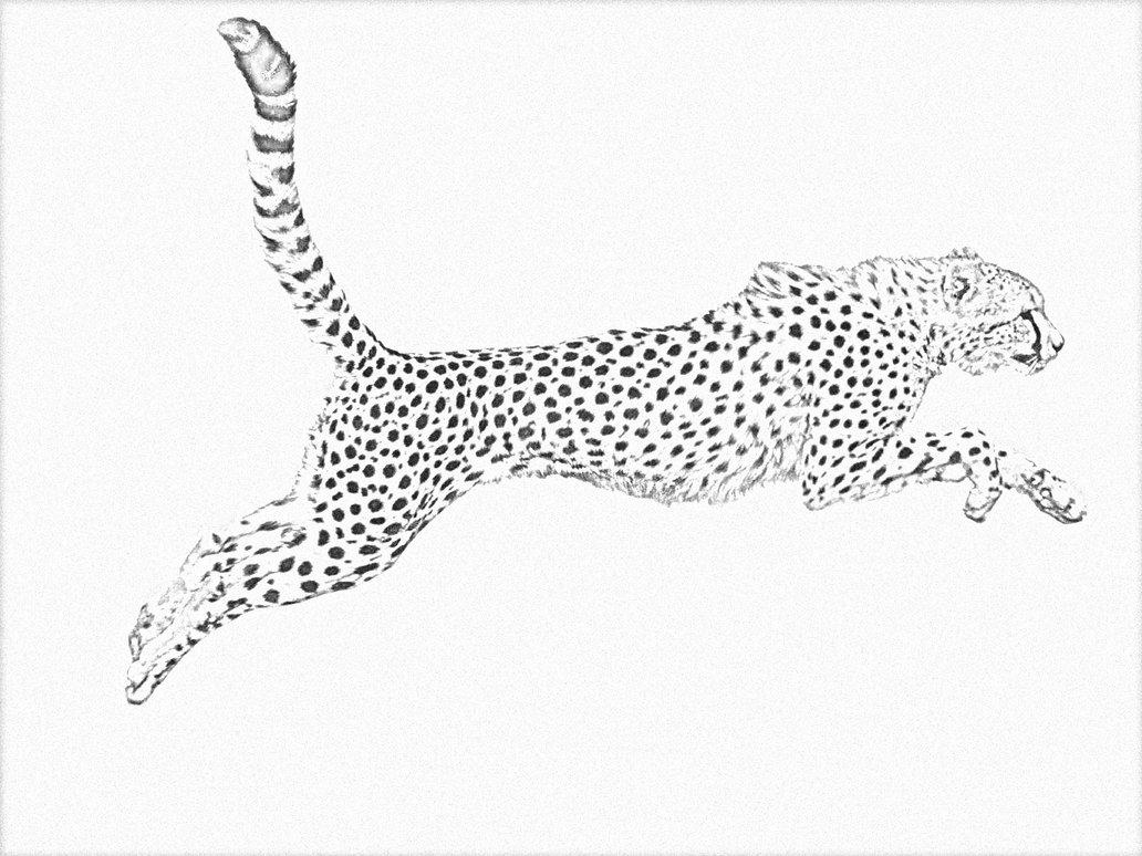 1032x774 Cheetah Line Drawing