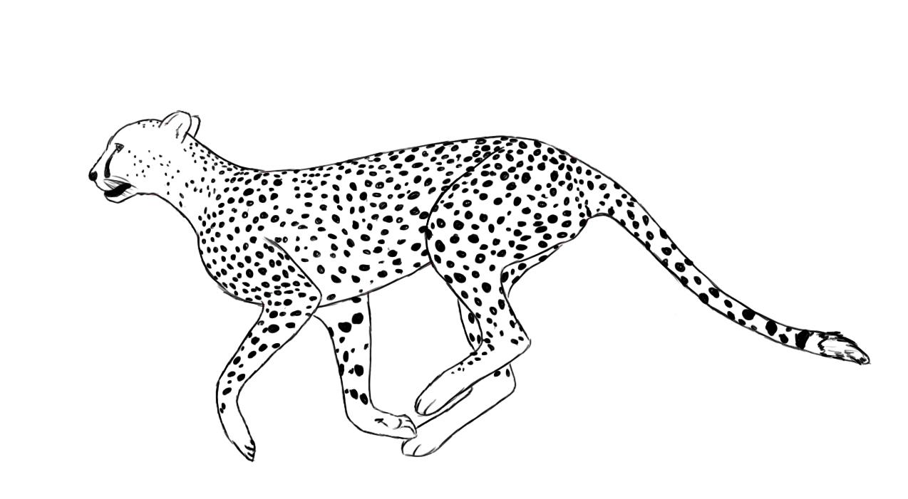 1274x701 Cheetah Cartoon Drawing Drawing Of A Cheetah Running Royalty Free