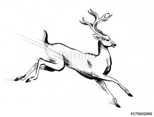 Line Drawing Deer : Running deer drawing at getdrawings free for personal use