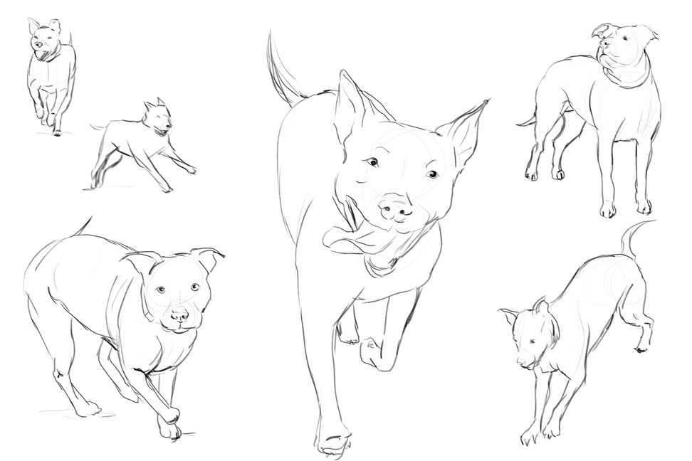 Running Dog Drawing