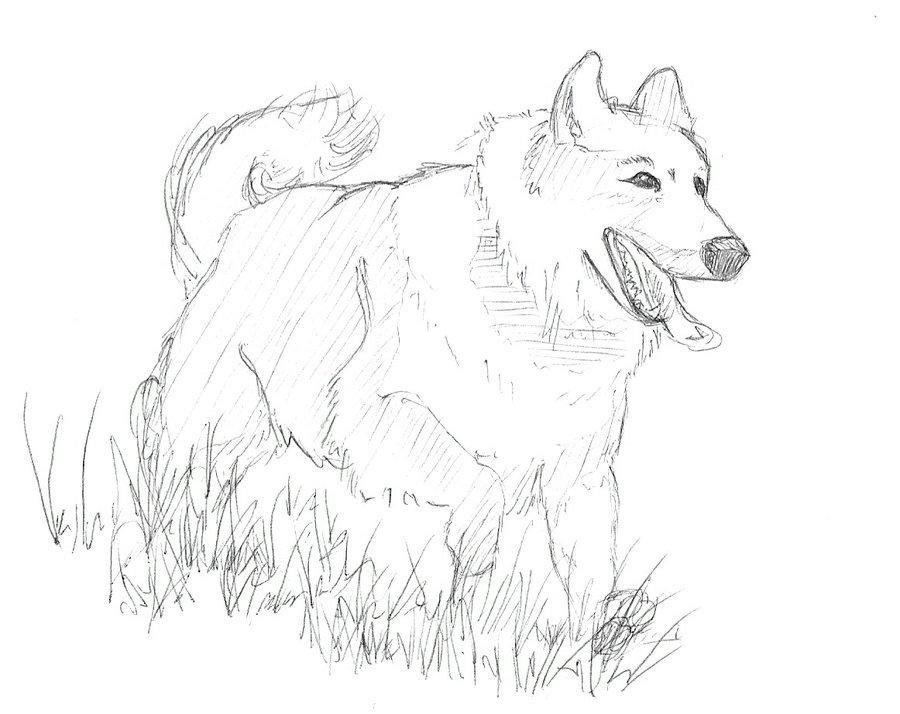 900x714 Dog Running Through Grass By Wayfaringpuma