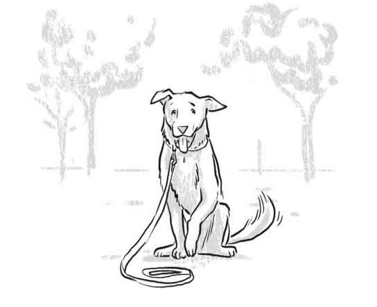 544x443 How To Take Your Dog Trail Running A Safety Guide
