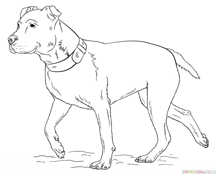 712x575 How To Draw A Pitbull Step By Step Drawing Tutorials Dog Art