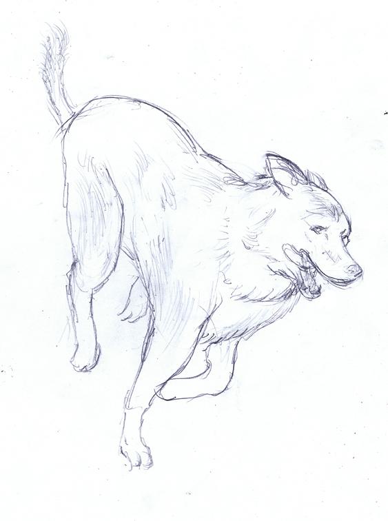 563x756 Jed Alexander New Husky Drawing