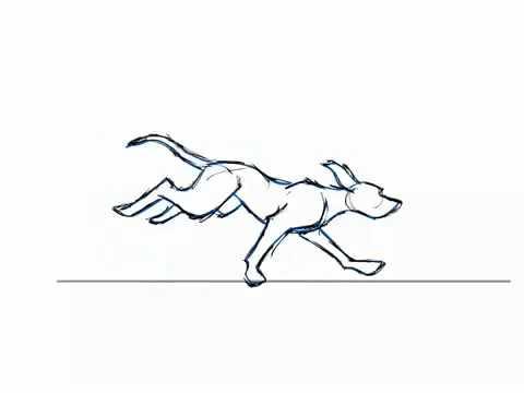 480x360 Dog Run Cycle