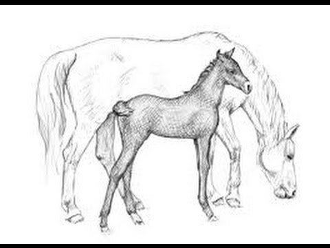 480x360 How To Draw A Running Horse