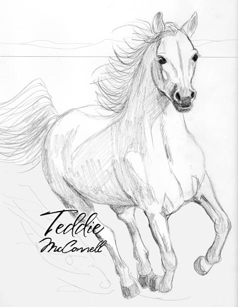 475x612 Running Arabian Horse Pencil Drawing By Teddiem