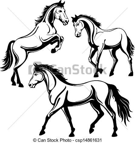 445x470 8 Best Arabian Horses Images On Arabian Horses