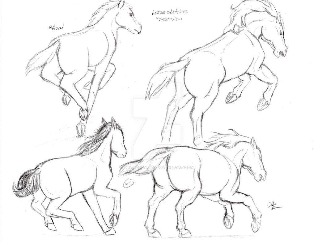 1016x787 Running Horse Rear View Sketches By Dragon Art14