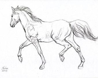 340x270 Framed Drawings Of Horses