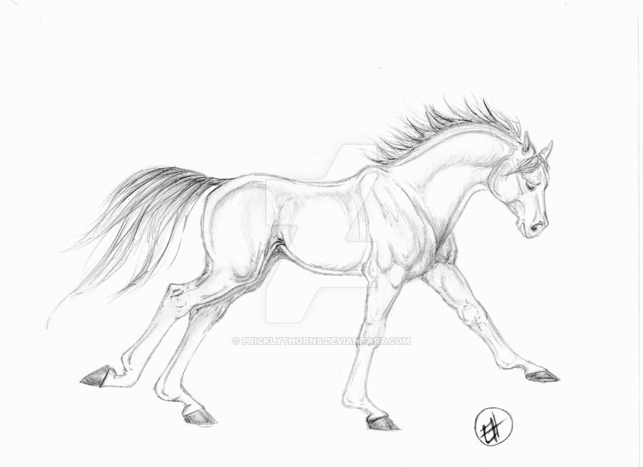 900x654 Running Horse Sketch By Pricklythorns