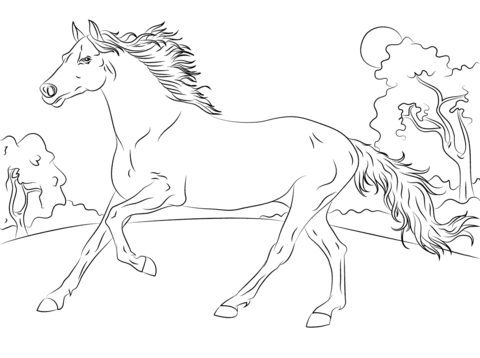 480x358 Running Arabian Horse Coloring Page Free Printable Pages