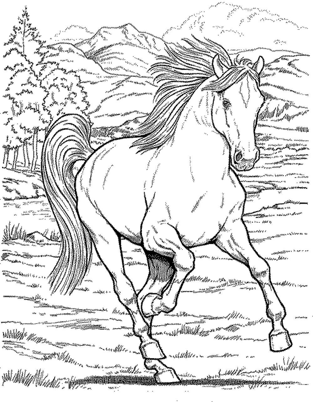 1000x1285 Free Horse Coloring Pages Mustang Wild