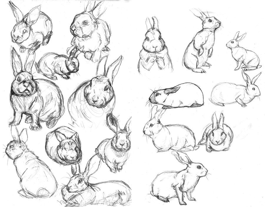 900x701 Rabbit Sketches By ~fiszike On Art