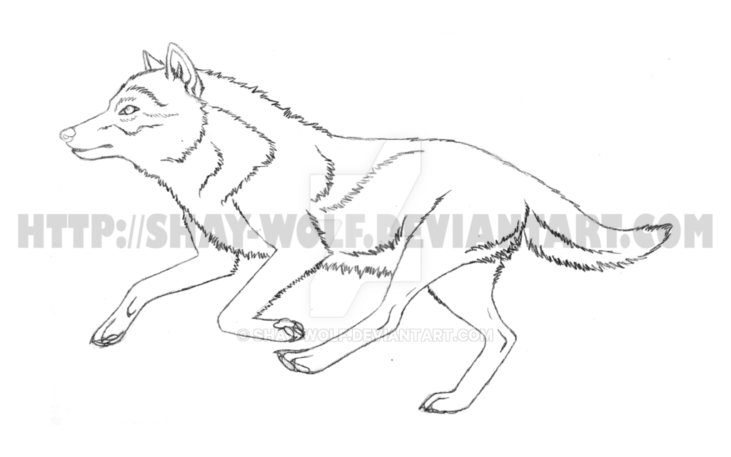 1024x641 Running Wolf Sketch By Shay Wolf