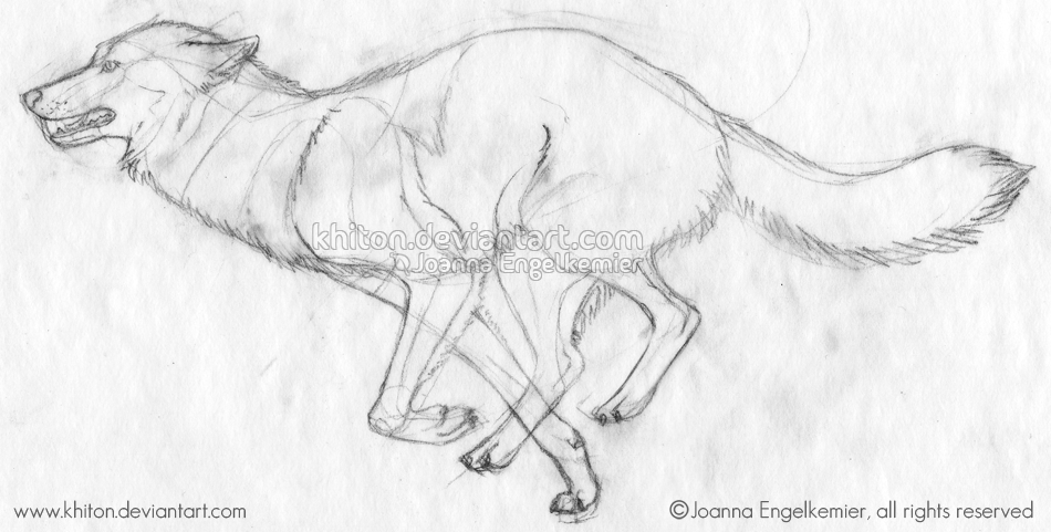 950x481 Wolf Running Sketch By Khiton