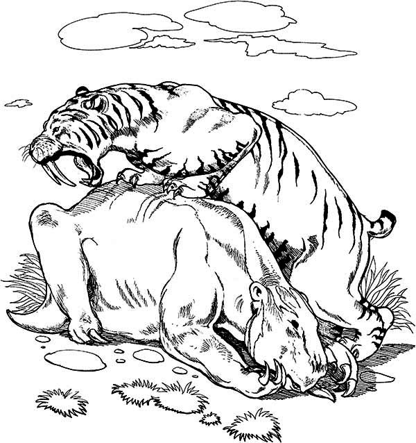 saber tooth tiger size