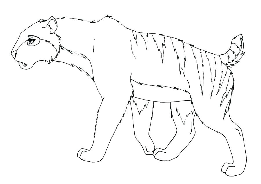 saber tooth tiger drawing at getdrawings com free for personal use