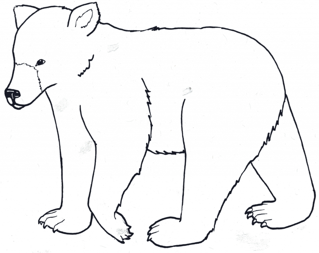1024x812 Easy Bear Drawing Black Bears Drawing Clipart Best