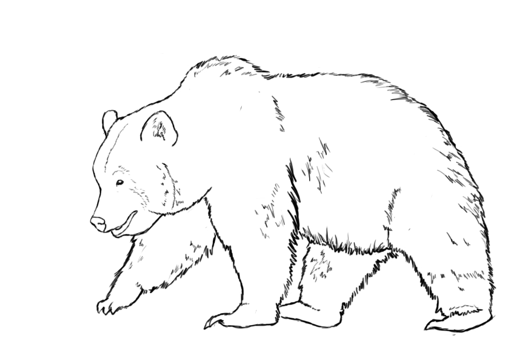 1024x704 How To Draw A Bear Outline Drawings, Outlines And Drawings
