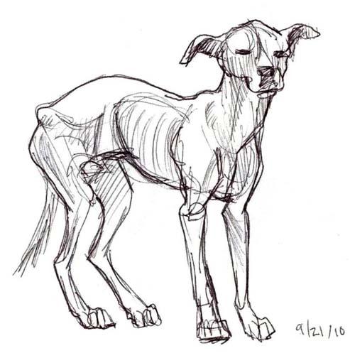 Sad Dog Drawing