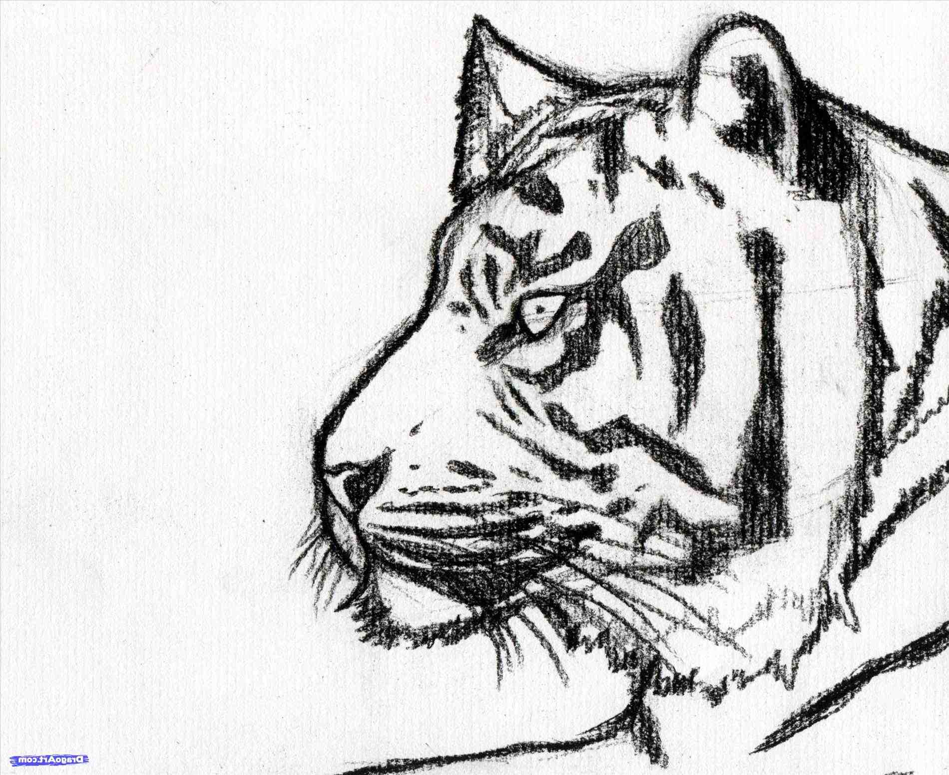 1900x1553 Easy Pencil Drawings Of Tigers