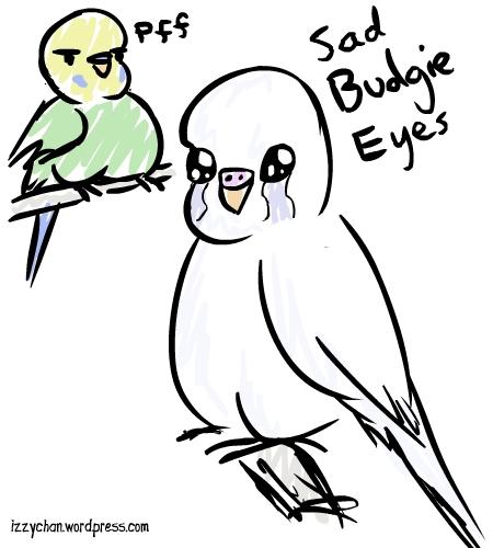 450x500 Sad Budgie Eyes