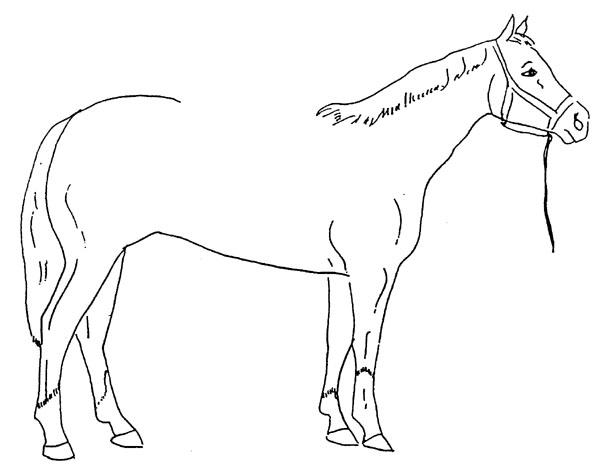 600x473 Draw A Saddle