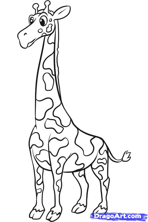 604x904 How To Draw A Simple Giraffe, Step By Step, Safari Animals
