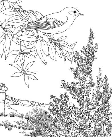 393x480 Nevada Mountain Bluebird And Sagebrush Coloring Page Free