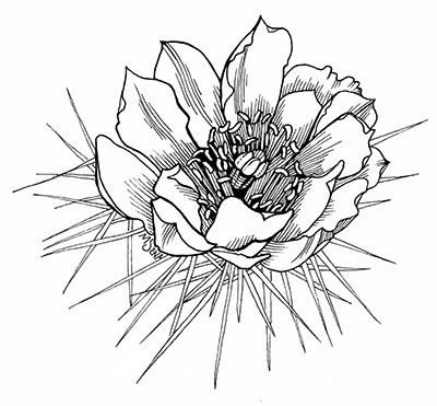 400x371 Series Of Cactus Plants And Cactus Flowers By Miyuki Sena