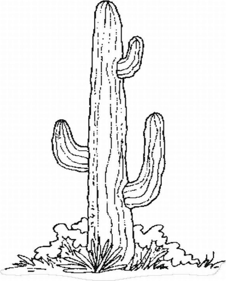 Pic Of Saguaro Cactus Coloring Pages