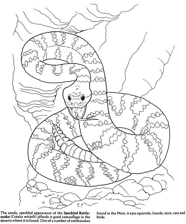 coloring pages for saugaros - photo#17