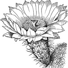 236x236 Via Giphy Cactus Flower Digital Drawing Cactushibiscus By