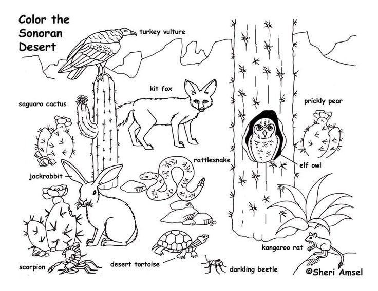 Desert Coloring Pages For Kids Az Coloring Pages