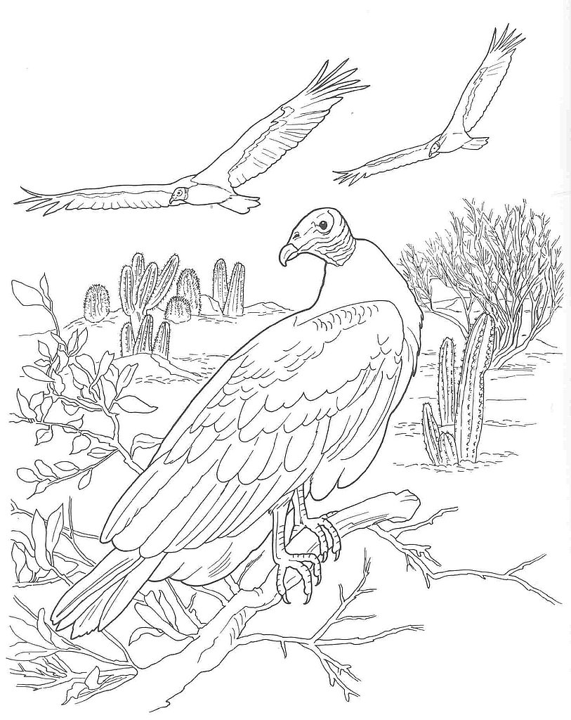 813x1024 Desert Scene Coloring Pages File Name Desert Animals Coloring