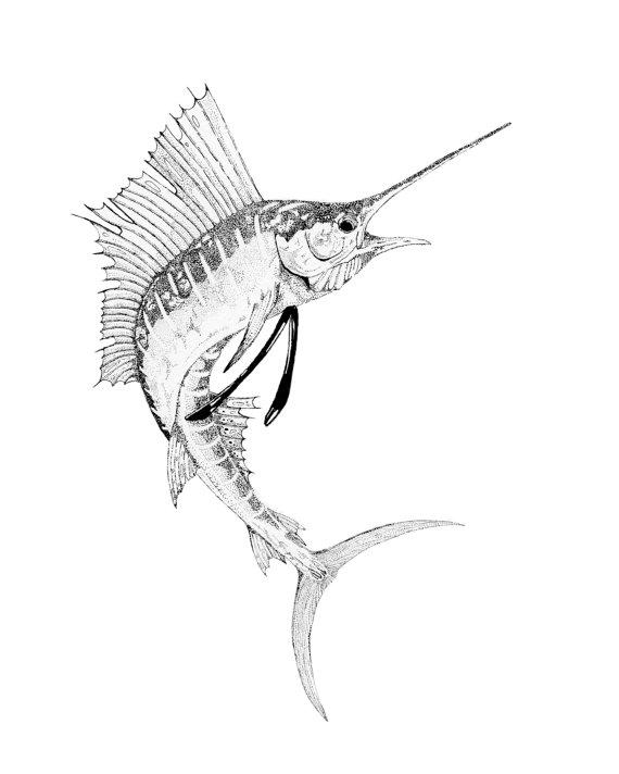 570x712 Sailfish Print From An Original Pen Amp Ink Drawing