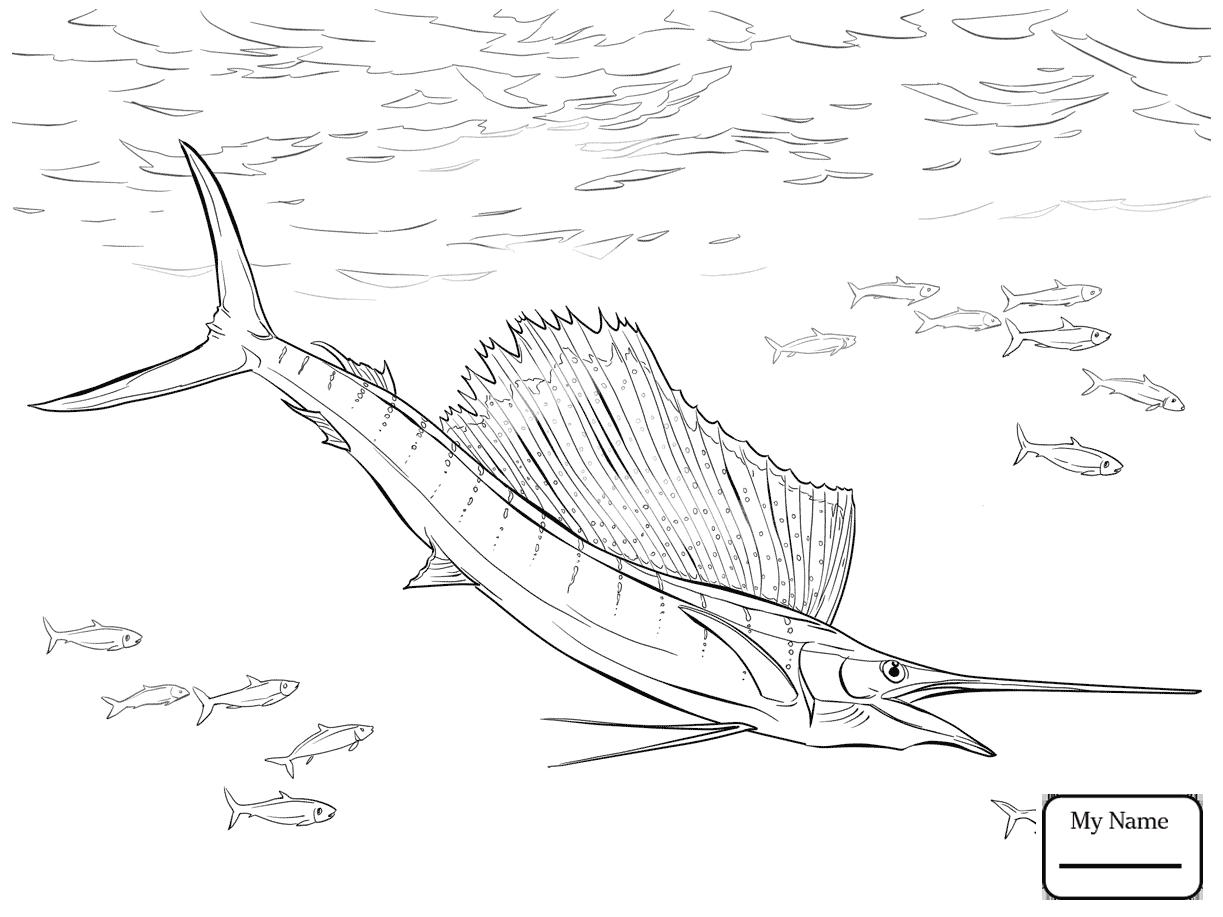 1223x917 Coloring Pages Swordfish Fish Atlantic Sailfish