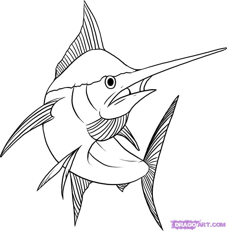 799x811 How To Draw A Marlin Step 7 Art Art Drawings