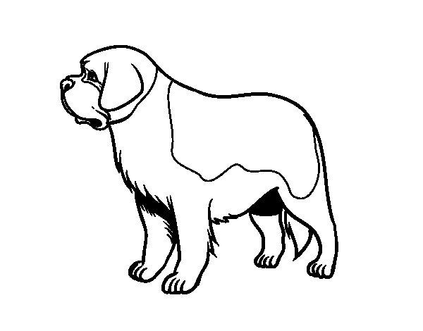 Saint Bernard Drawing at GetDrawings.com | Free for personal use ...