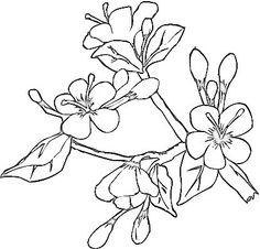 236x226 Drawn Sakura Blossom Apricot Blossom