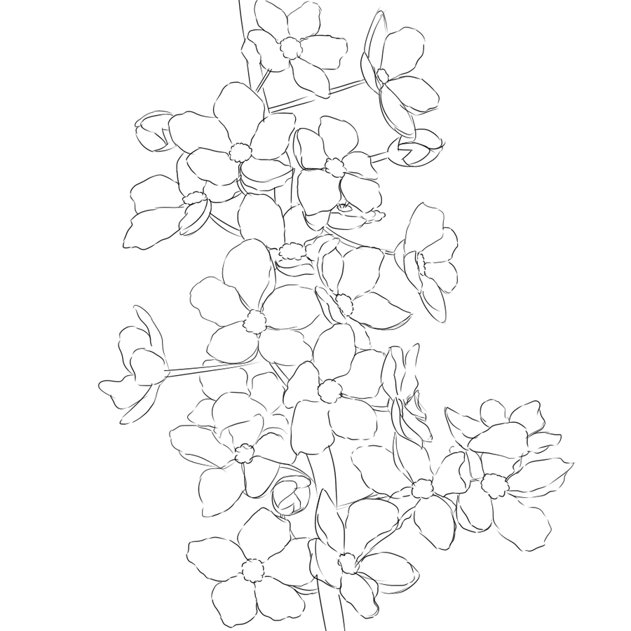 900x900 Cherry Blossom Line Art By Silly Midnight