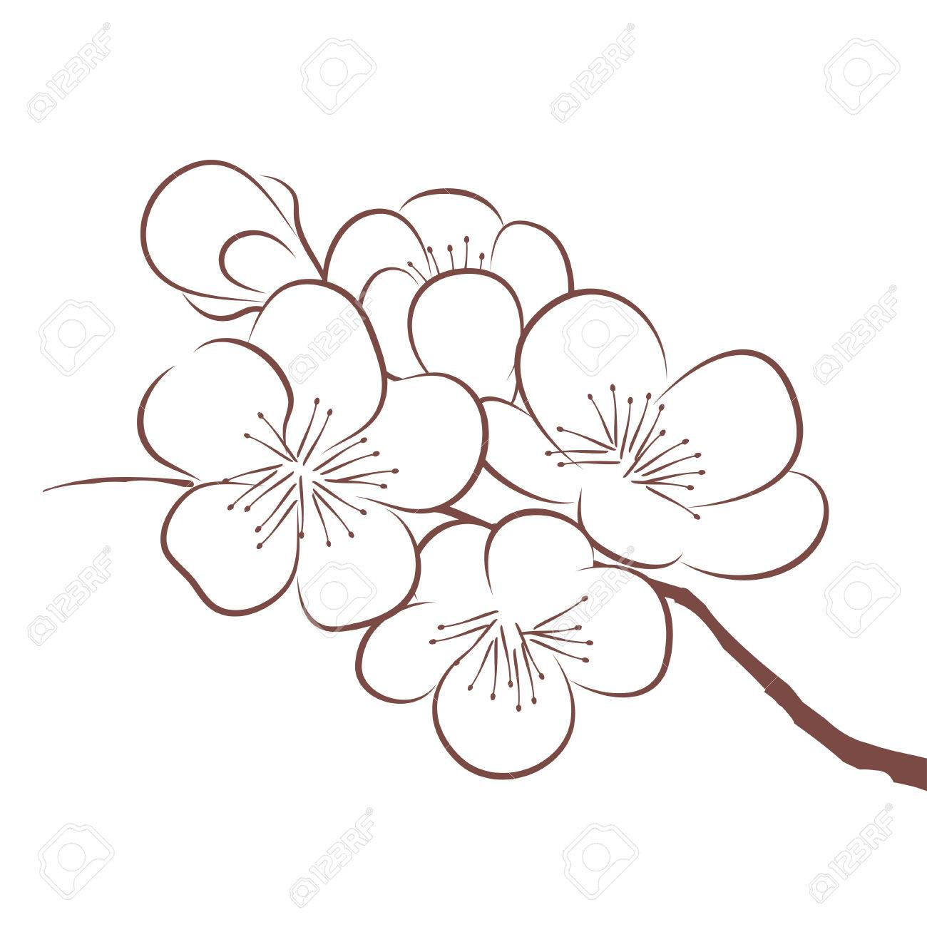1300x1300 Spring Cherry Blossom Royalty Free Cliparts, Vectors, And Stock